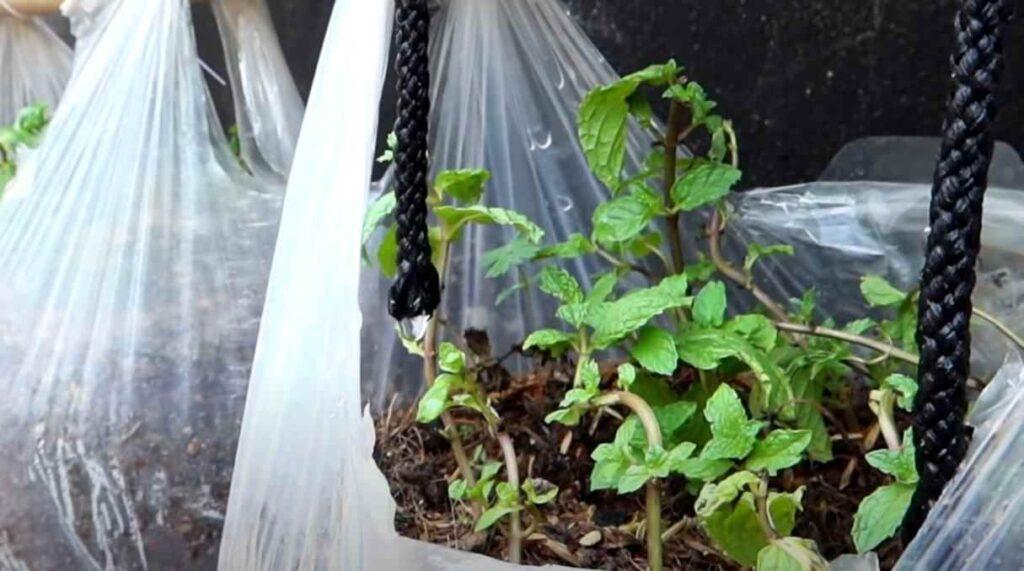foto 10 2 – Простой способ выращивания зелени: вертикальные грядки из пакетов (с капельным поливом)