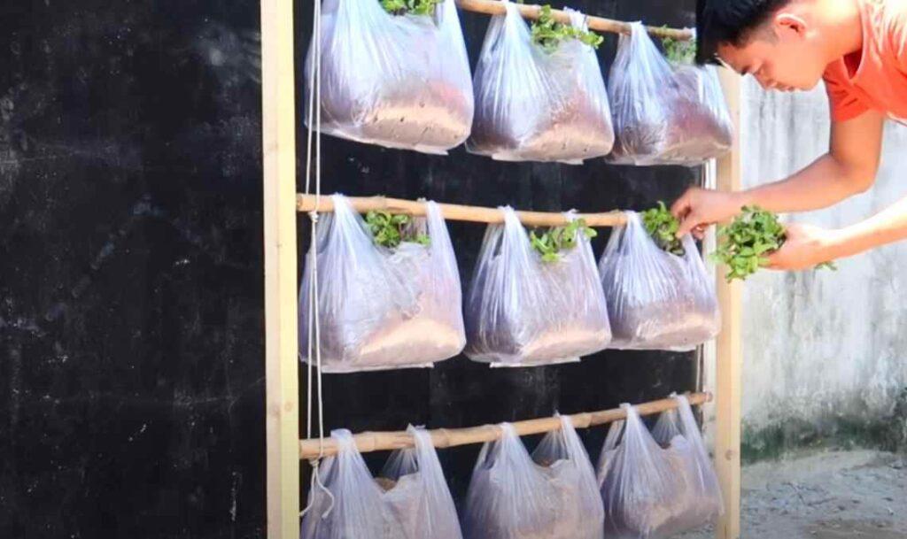 foto 5 5 – Простой способ выращивания зелени: вертикальные грядки из пакетов (с капельным поливом)