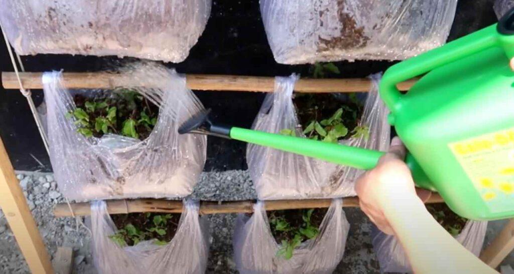 foto 6 4 – Простой способ выращивания зелени: вертикальные грядки из пакетов (с капельным поливом)