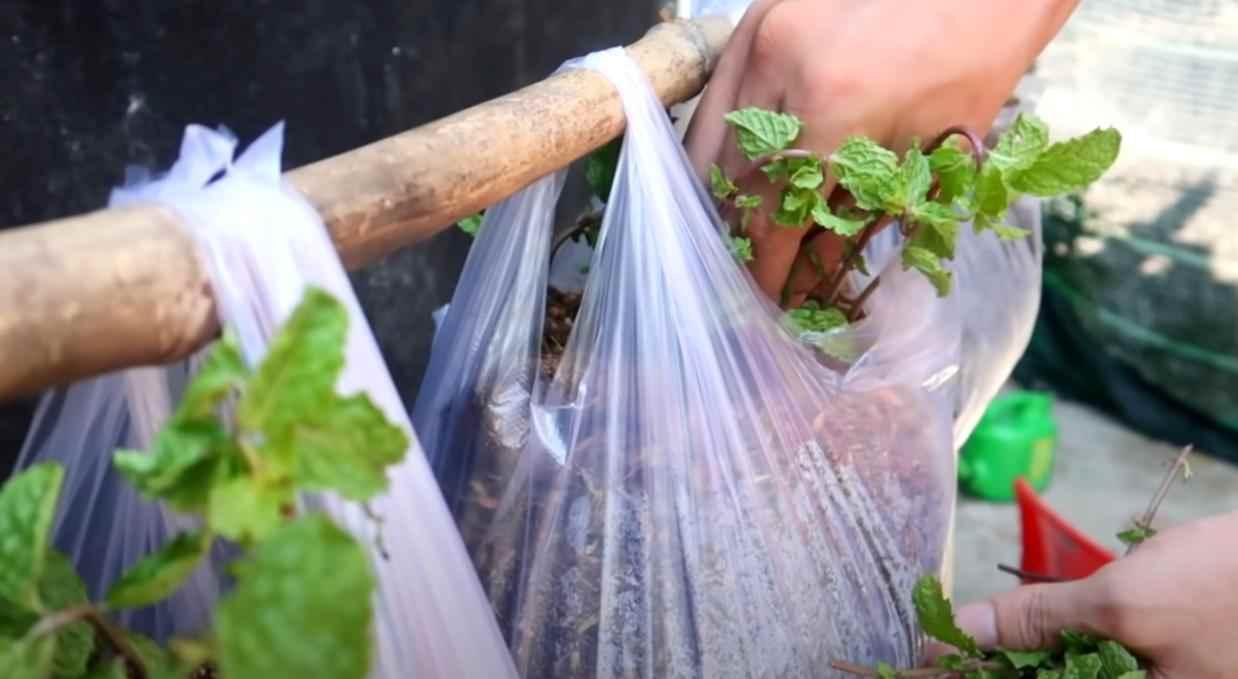 na prevyu 4 – Простой способ выращивания зелени: вертикальные грядки из пакетов (с капельным поливом)